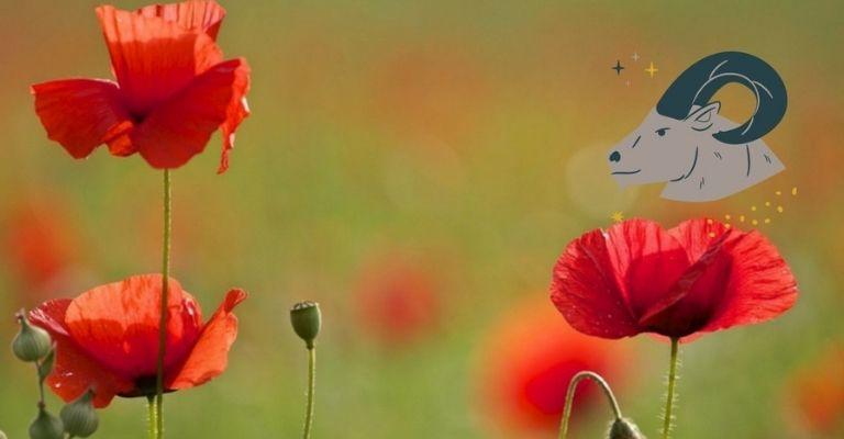 flor-ideal-capricornio