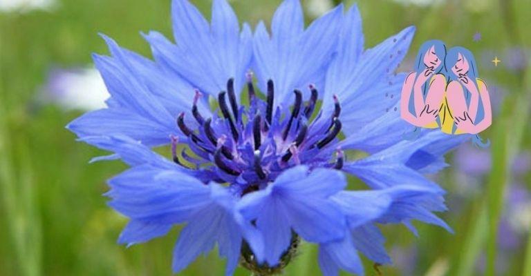 flor-ideal-geminis