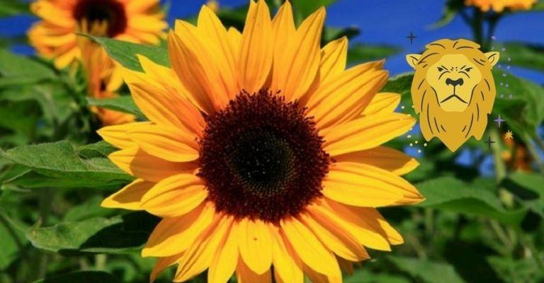flor-ideal-leo
