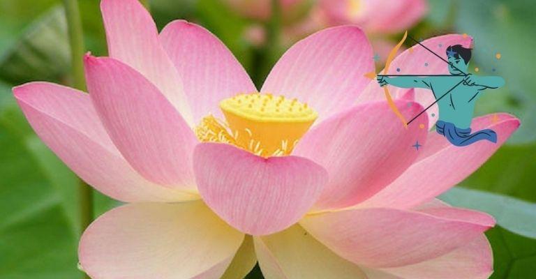 flor-ideal-sagitario