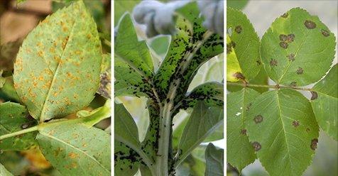 parasitos de plantas