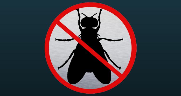 eliminar insectos vinagre