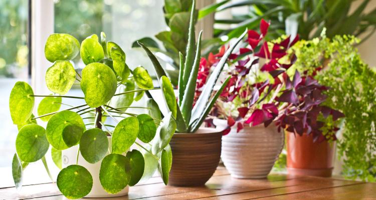 como-cuidar-plantas-en-invierno
