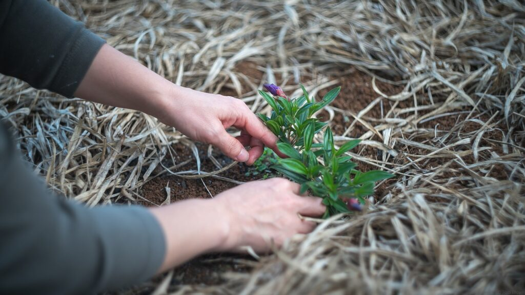 cuidados-plantas