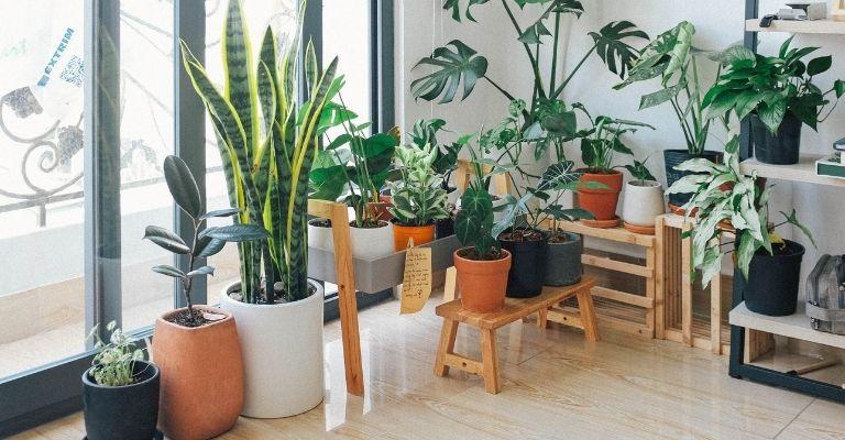ubicar-plantas-de-interior
