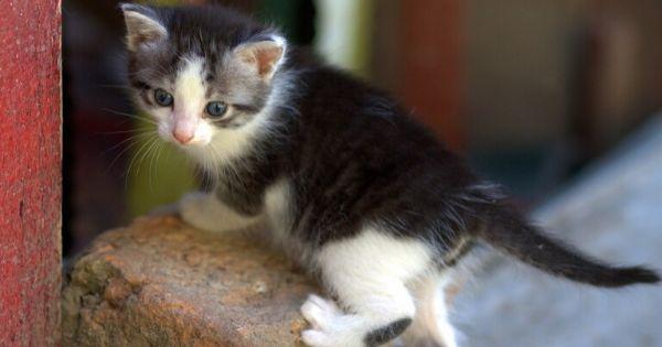 Gatos: qué significan los 10 movimientos de cola más comunes