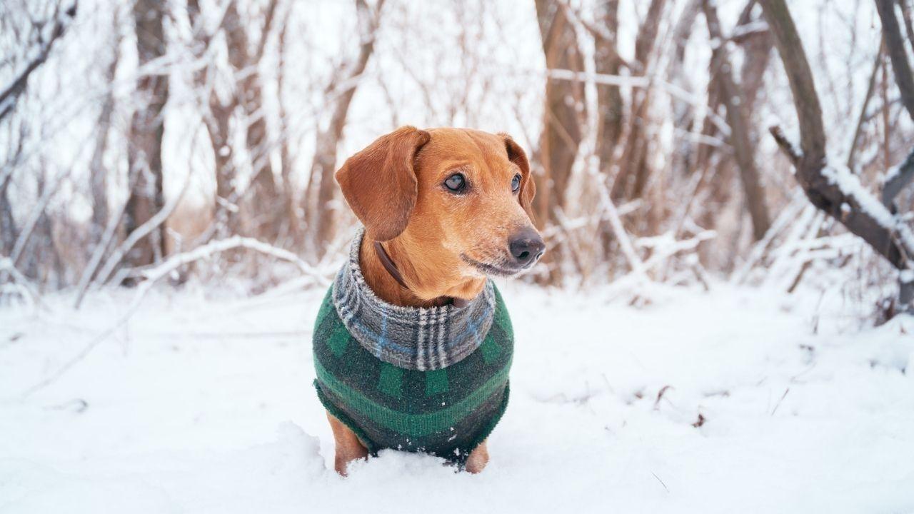 abrigo-para-perros