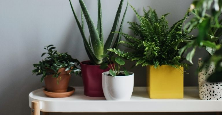 cuidar-plantas-de-interior