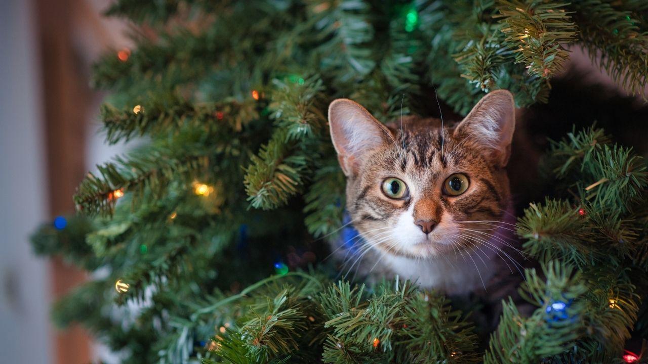 gato-arbol-de-navidad